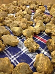 Truffles everywhere