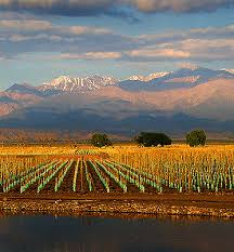 Argentina vines meet the Andes