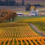 Stoller Vineyards.  Oregon