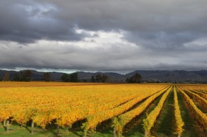 marlborough-wine-region