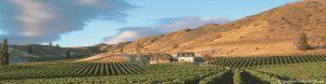 Felton-Road-Vineyard-Central-Otago-Tourism
