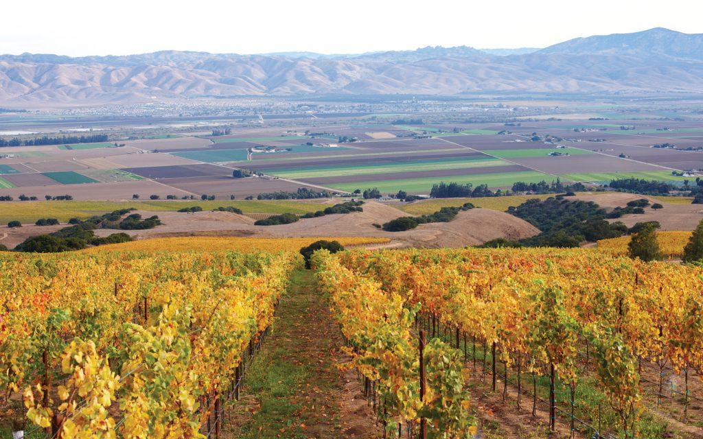 Hahn Vineyards