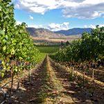 Road-13-Vineyards