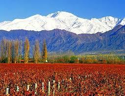 Chile Vineyards