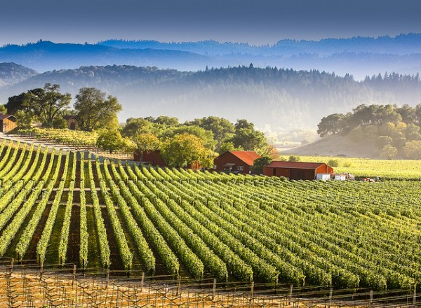 cali vineyards