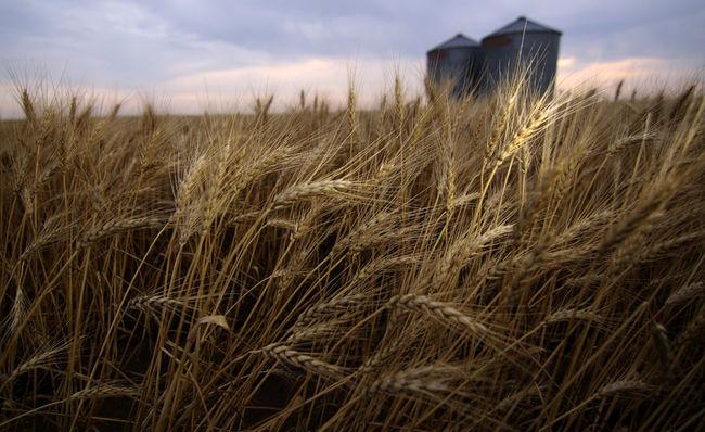 harvest-season